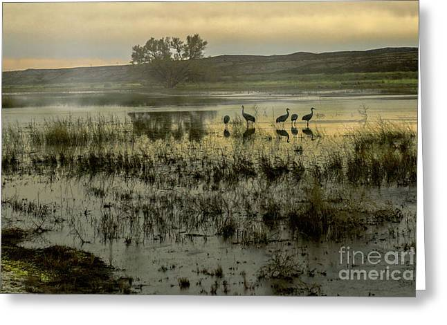 Sandhill Serenity Greeting Card