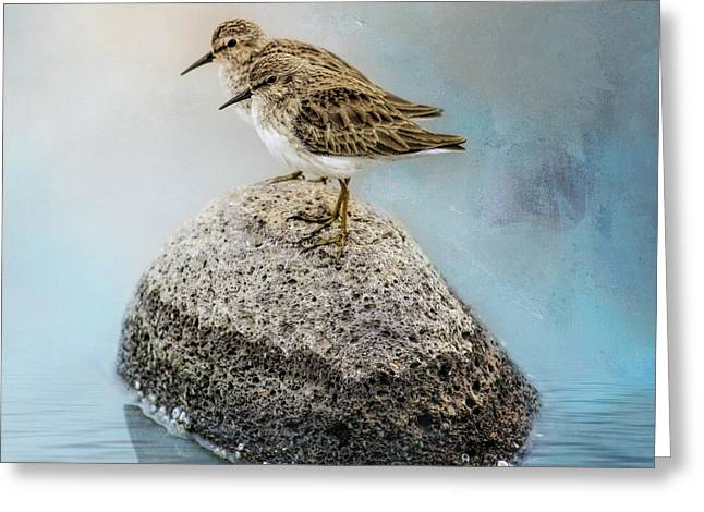 Sandpipers On A Rock Greeting Card