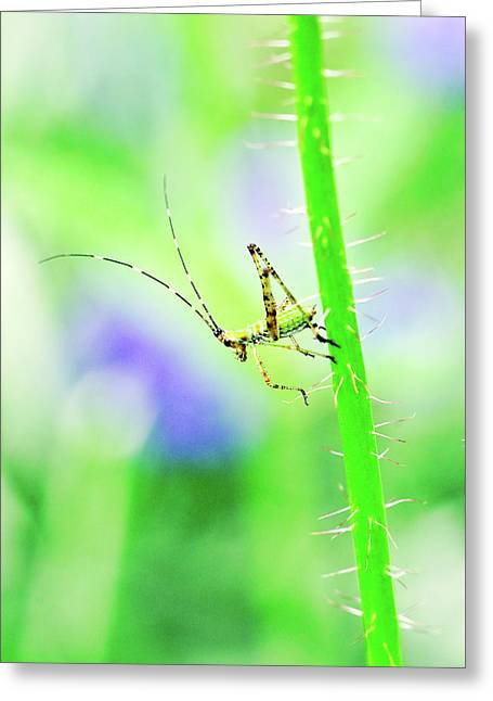 Say Hello To My Little Green Insect Friend Greeting Card