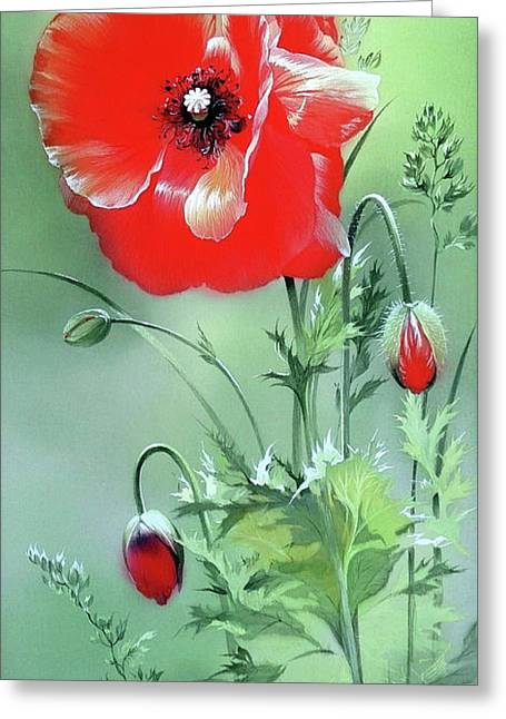 Scarlet Poppy Flower Greeting Card