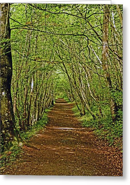 Scotland. Killiecrankie. Path Through The Trees. Greeting Card