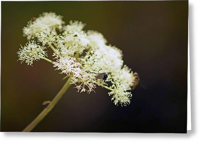 Scotland. Loch Rannoch. White Flowerhead. Greeting Card