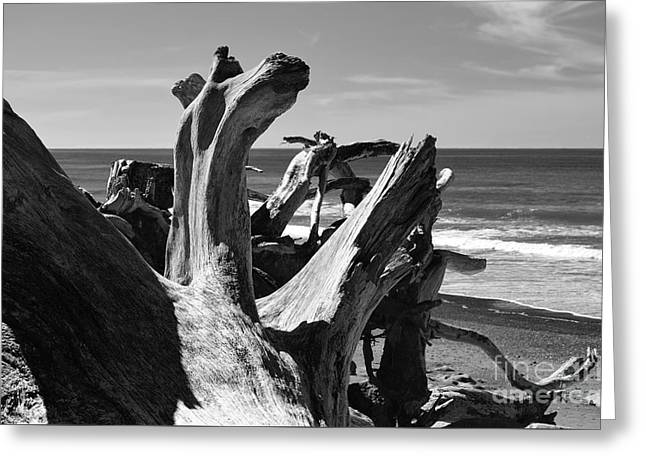 Greeting Card featuring the photograph Sea Bones by Jeni Gray