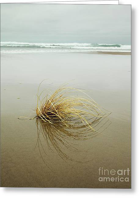 Greeting Card featuring the photograph Sea Grass On Beach by Charmian Vistaunet