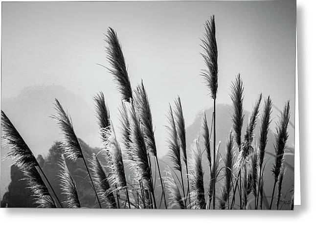 Greeting Card featuring the photograph Sea Oats I Bw by David Gordon