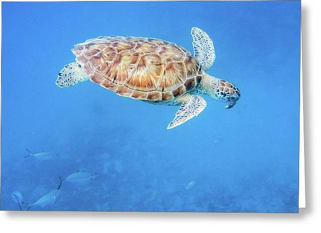 Sea Turtle And Fish Swimming Greeting Card