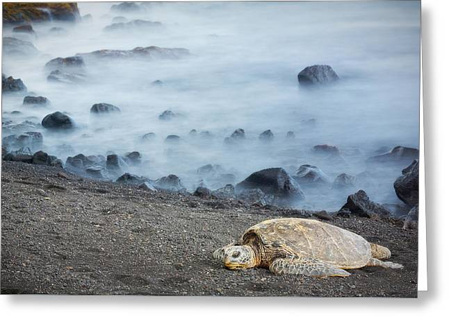 Greeting Card featuring the photograph Sea Turtle by Nicole Young