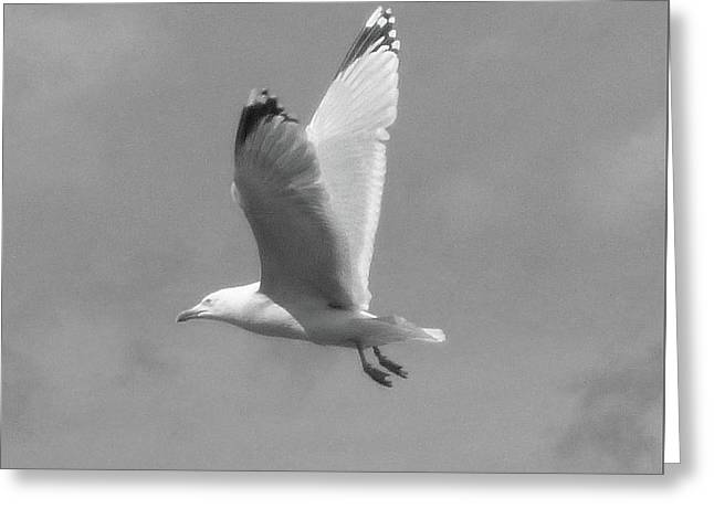 Seagull Over Llandudno Greeting Card