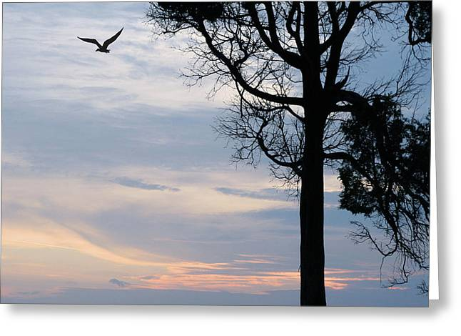 Seagull Sunset At Catawba Greeting Card
