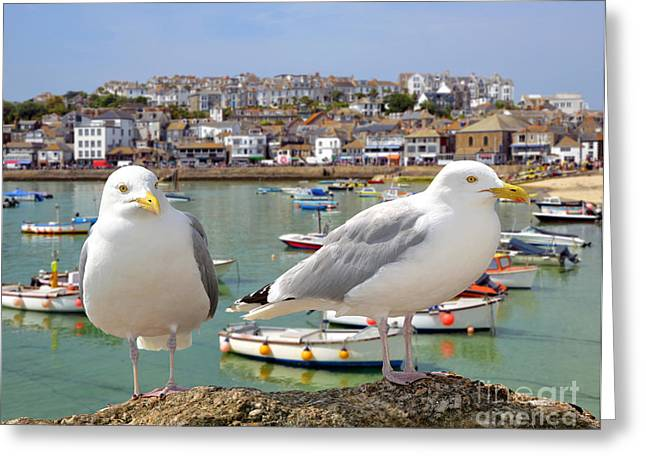 Seagulls In St Ives Harbour Cornwall Greeting Card