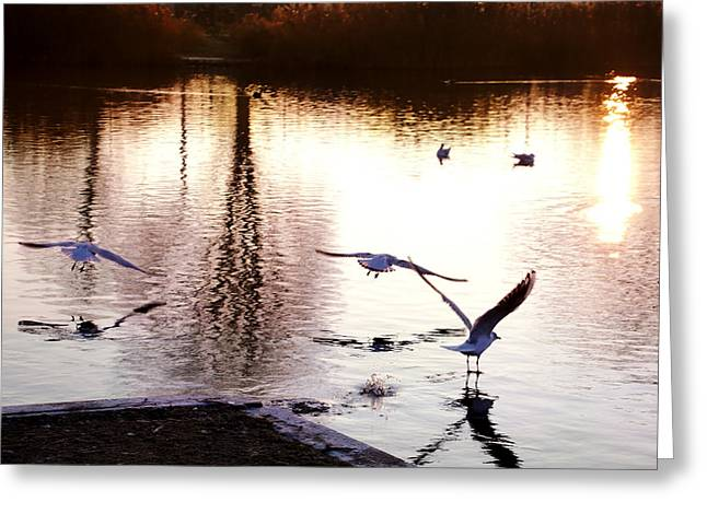 Seagulls In The Morning Greeting Card