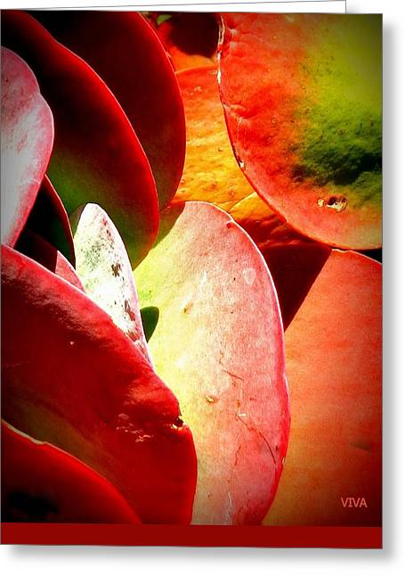 Secret  Life  Of  Plants Greeting Card