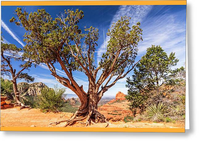 Sedona, Az - Merry-go-round The Utah Juniper Greeting Card