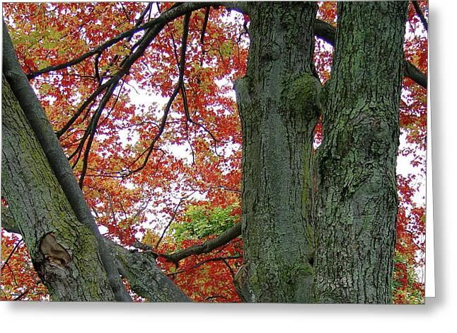 Seeing Autumn Greeting Card