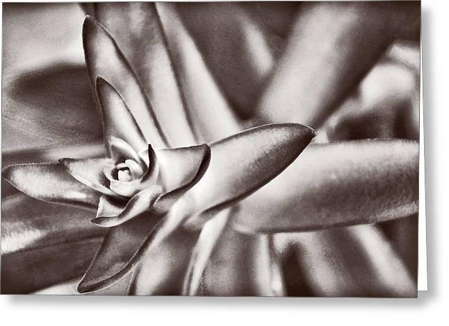 Sensual Succulent II Greeting Card