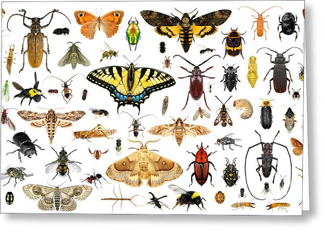 Set Of Insects On A White Background Greeting Card