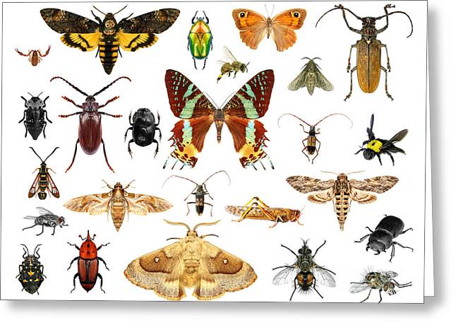 Set Of Insects On White Background Greeting Card