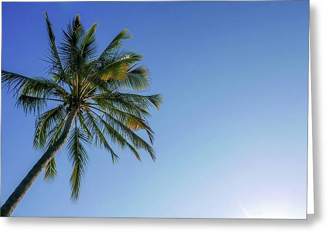 Shades Of Blue And A Palm Tree Greeting Card