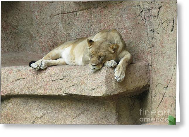 She Lion Greeting Card