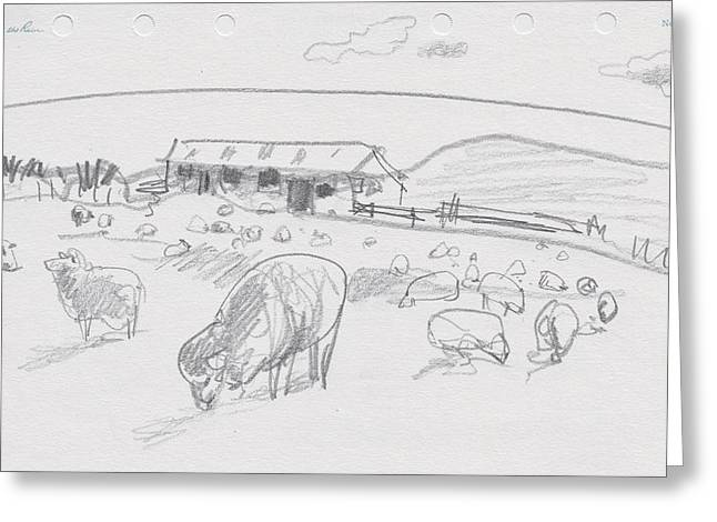 Sheep On Chatham Island, New Zealand Greeting Card