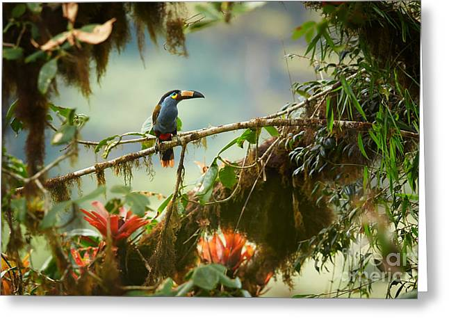 Shy High Altitude Andean Colorful Greeting Card