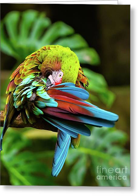 Shy Parrot Greeting Card