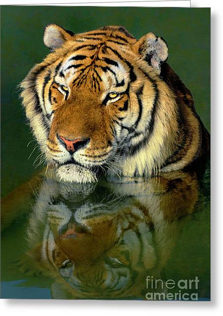 Siberian Tiger Reflection Wildlife Rescue Greeting Card