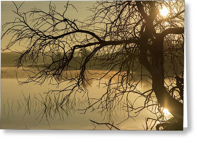 Silhouette Of A Tree By The River At Sunrise Greeting Card