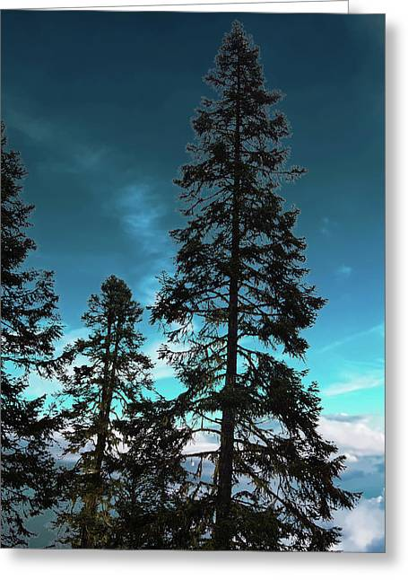 Silhouette Of Tall Conifers In Autumn Greeting Card