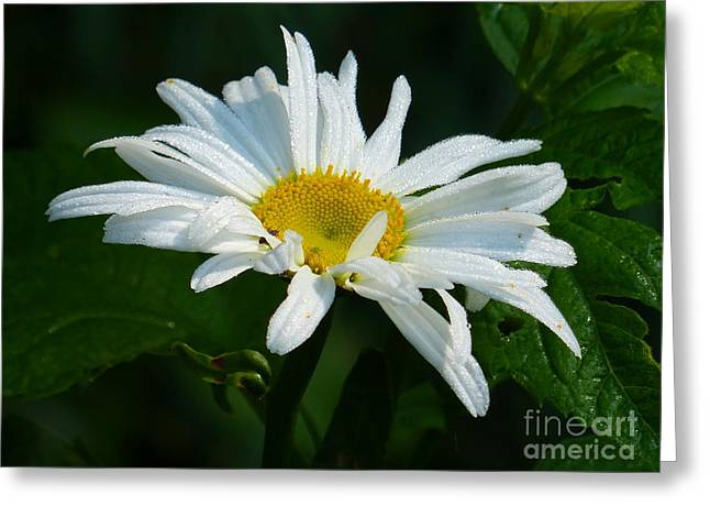 Greeting Card featuring the photograph Simple Perfection by Rosanne Licciardi