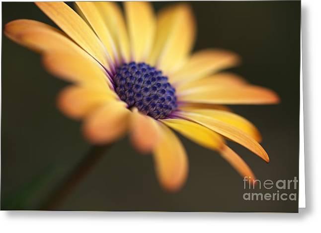 Simply Beautiful In Yellow To Orange  Greeting Card