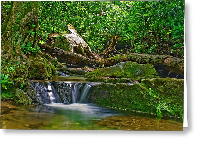 Sims Creek Waterfall Greeting Card