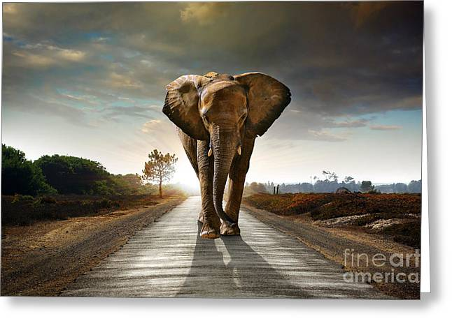 Single Elephant Walking In A Road With Greeting Card