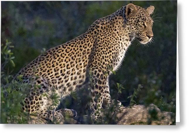 Sitting Leopard Greeting Card
