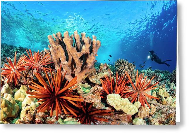 Slate Pencil Sea Urchins Greeting Card