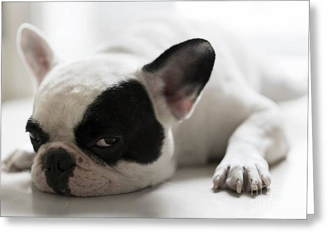 Sleepy French Bulldog Greeting Card