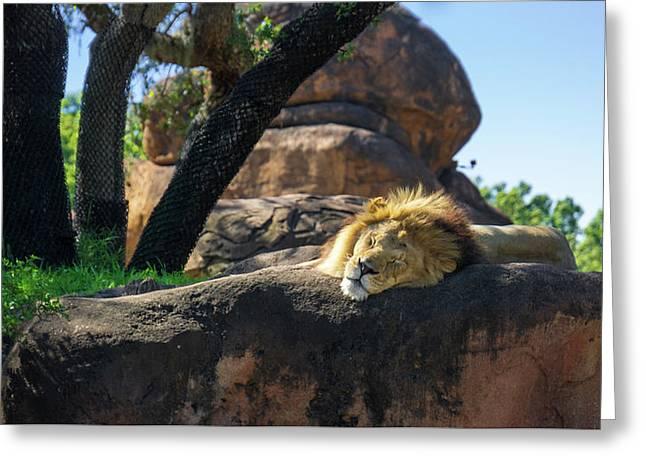 Sleepy Lion Greeting Card