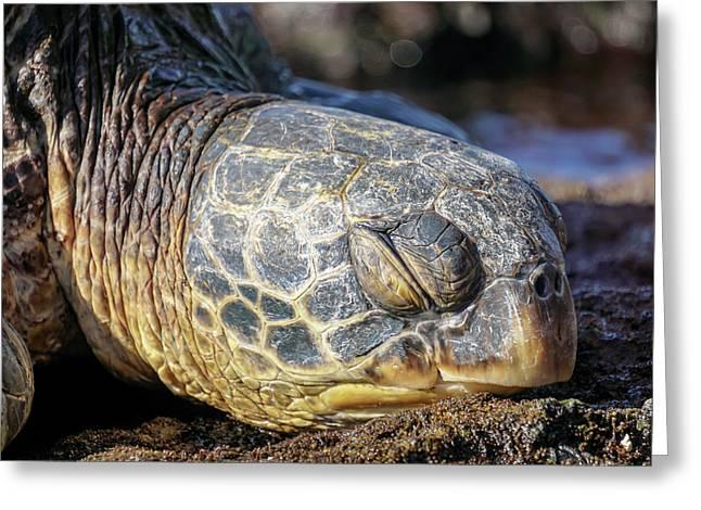 Sleepy Maui Sea Turtle Greeting Card