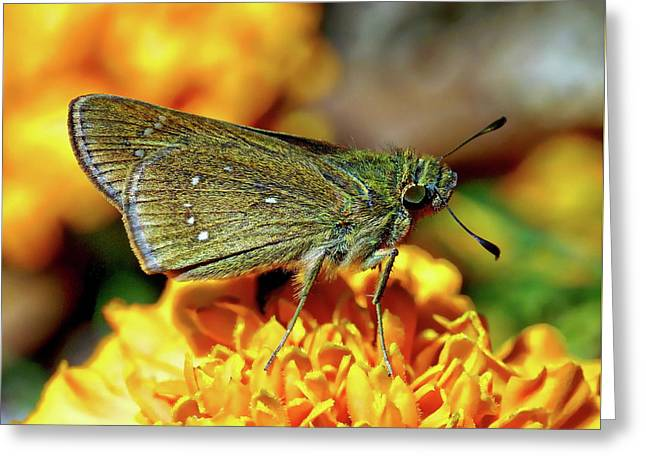 Greeting Card featuring the photograph Small Branded Swift by Anthony Dezenzio