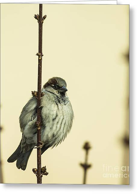 Small Passerine Bird Sitting On The Greeting Card