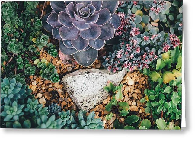 Greeting Card featuring the photograph Small Succulent Garden by Top Wallpapers
