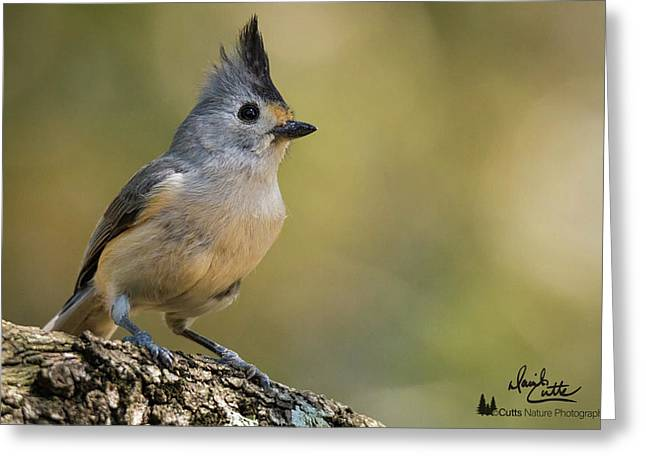 Small Titmouse Greeting Card