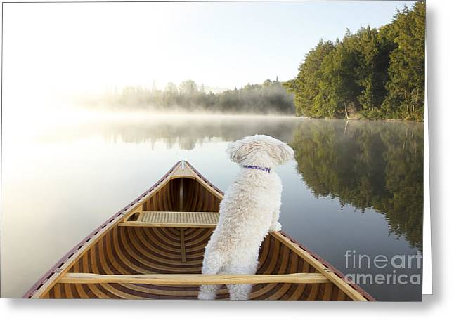 Small White Cockapoo Dog Navigating Greeting Card