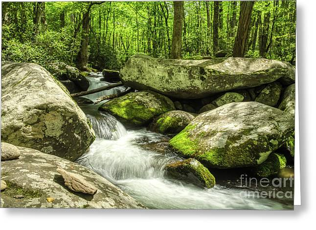 Greeting Card featuring the photograph Smoky Mountains In Spring by Mel Steinhauer