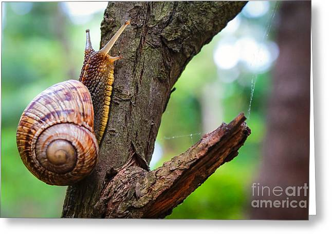 Snail On The Tree In The Garden. Snail Greeting Card