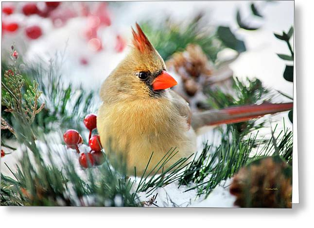 Greeting Card featuring the photograph Snow Cardinal by Christina Rollo