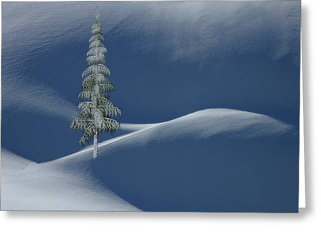 Snow Covered Tree And Mountains Color Greeting Card