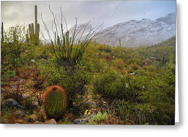 Snow In The Desert Greeting Card