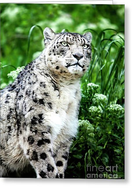 Snow Leopard, Leopard Art, Animal Decor, Nursery Decor, Game Room Decor,  Greeting Card
