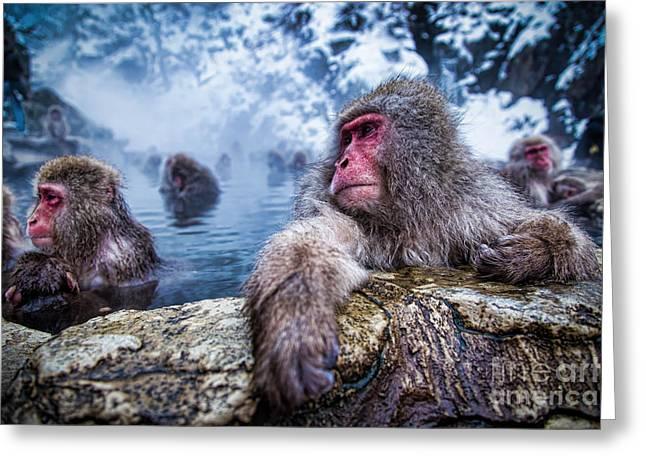 Snow Monkey Greeting Card